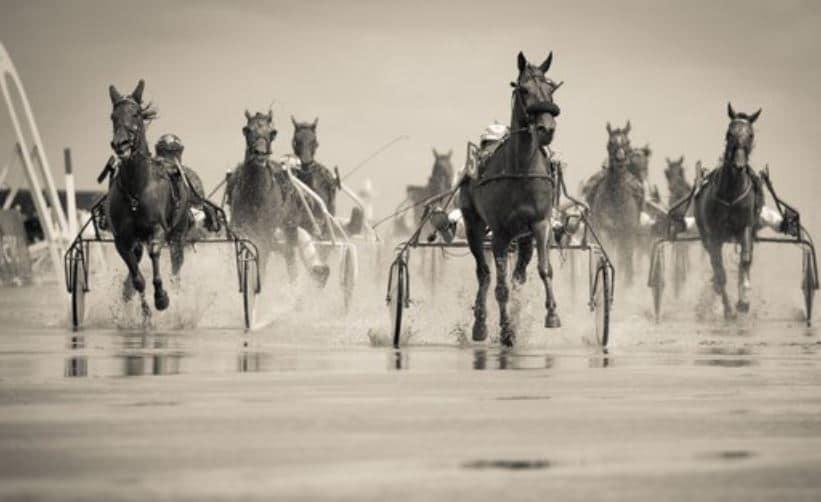 Horse Racing Information