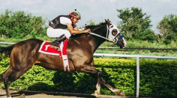 Horse Racing Tote Scoop 6